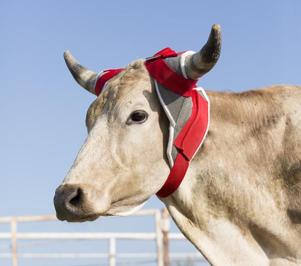 Mustang Stier-Horn Wrap